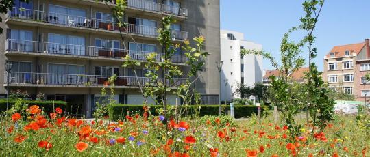 Place Terdelt : fruitiers et pré fleuri