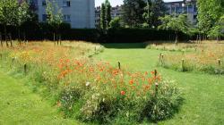 Pré fleuri au parc Albert